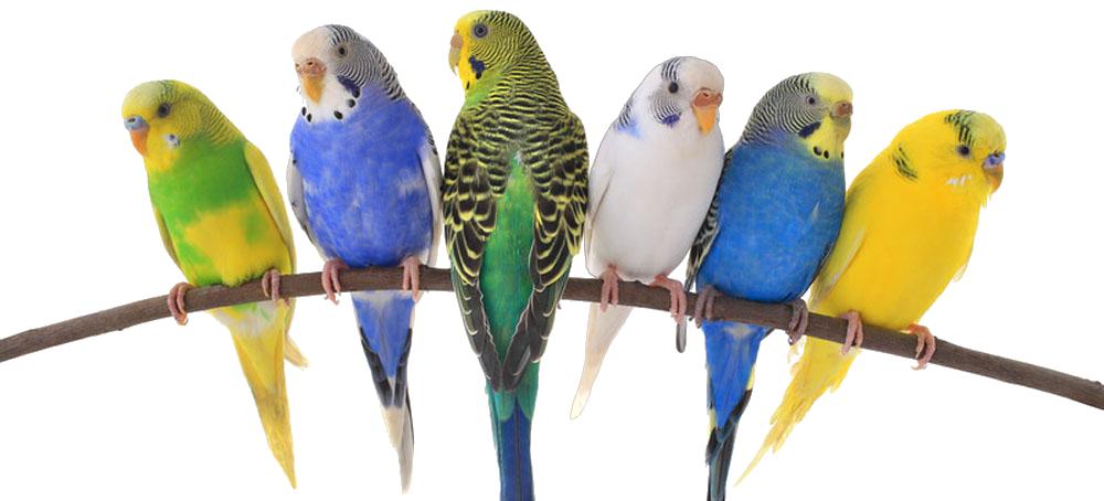 Birds & Exotics Pets