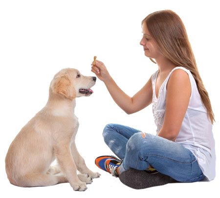 Dog Obedience Training Obedience Classes Dog Trainer School