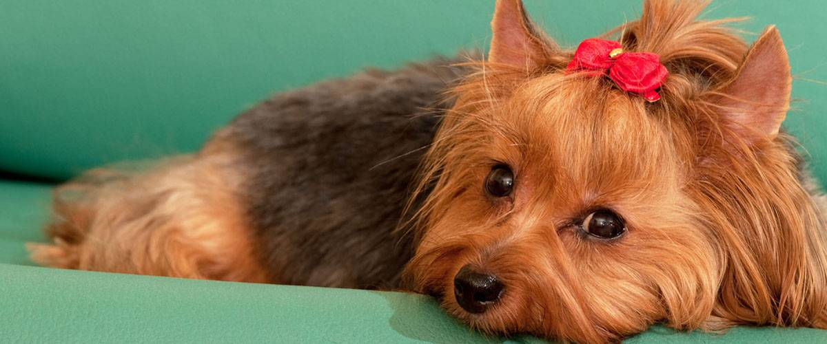 dog-grooming-downers-grove